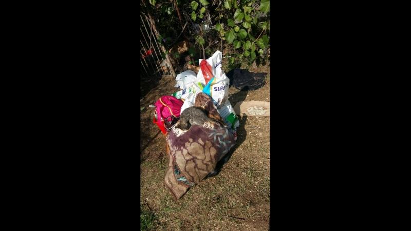 16.10 - закупка гуманитарки на собранные средства