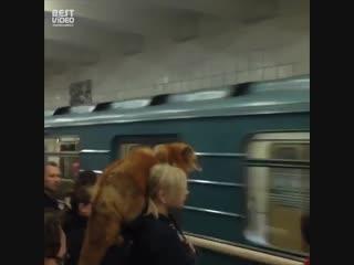 Обычное утро в метро