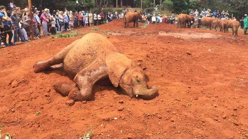 Слонята в Кении