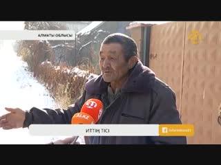 Алматы облысында 8 жастағы қызды ит талап тастады
