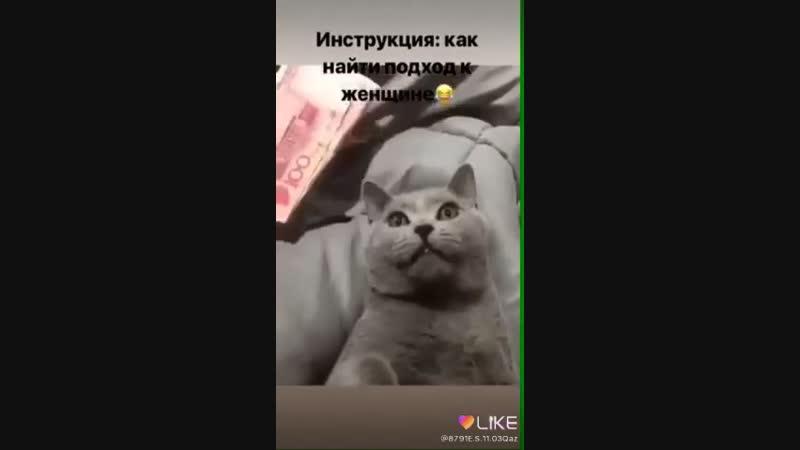 как примонить кота