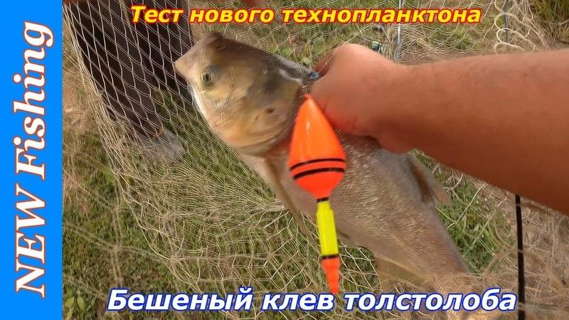 Тест нового технопланктона. Бешеный клев толстолоба.