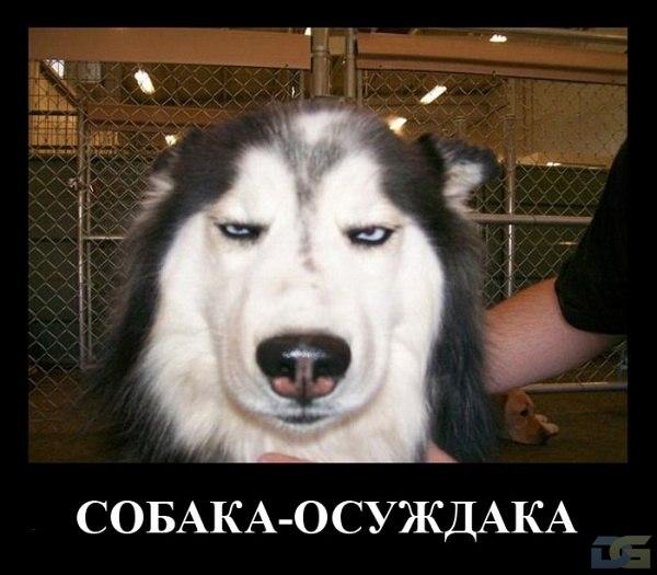 Собака-осуждака