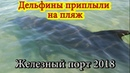 Дельфины приплыли на пляж. Железный порт 2018 \ The dolphins sailed to the beach. Iron Port 2018