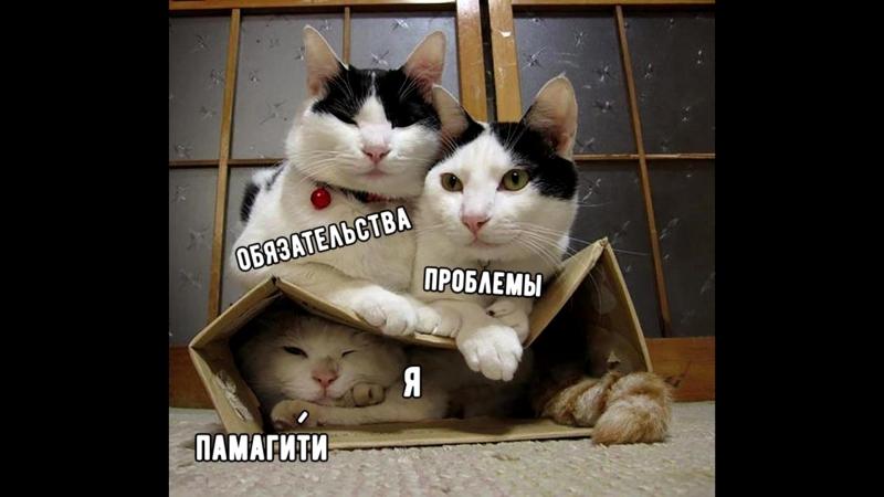 ещё одни помощнички ))