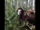 Поохотился на уток. Охотник встретил в лесу верблюда. Живой анекдот на охоте