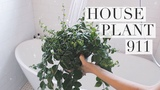 My House Plant Rehab Routine!