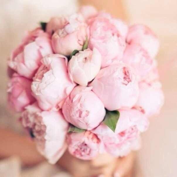 Заказ цветов минеральные воды доставка цветов курганинск краснодарский край