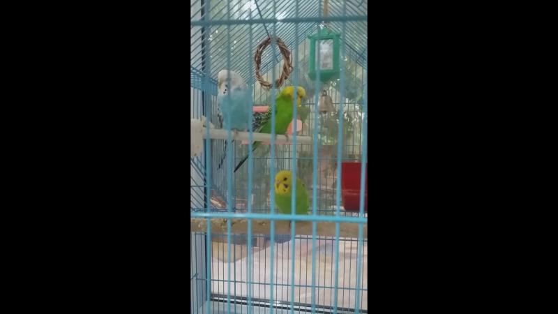 грустят мои птички