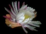 Hand-made!!! flowers from plastic . Цветы из пластиковых бутылок!!! Очень красиво и просто!