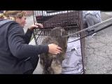 История из жизни собаки о нужности и принадлежности