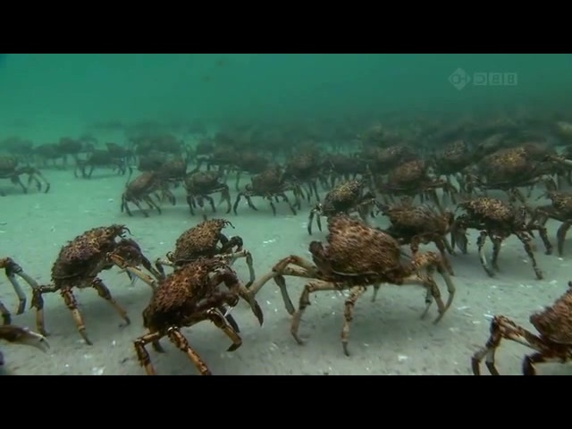 March of the spycrabs
