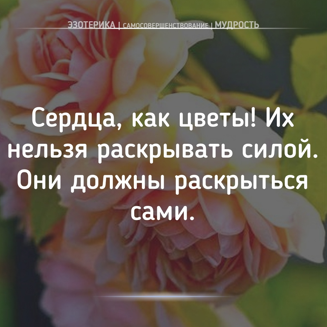 https://pp.userapi.com/c849420/v849420185/a68ec/5d64NBfgyXY.jpg