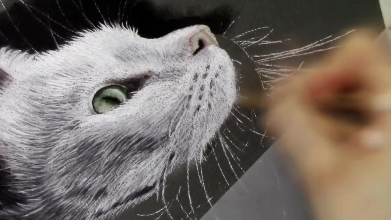Realistic White Cat Portrait - Pastel Drawing _ Speed Art Painting