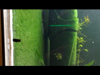 Борьба с водорослями. Сайдекс