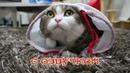 Приколы с котами – Смешная озвучка животных – Самое смешное видео от PSO