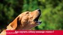 Как научить свою собаку команде голос?