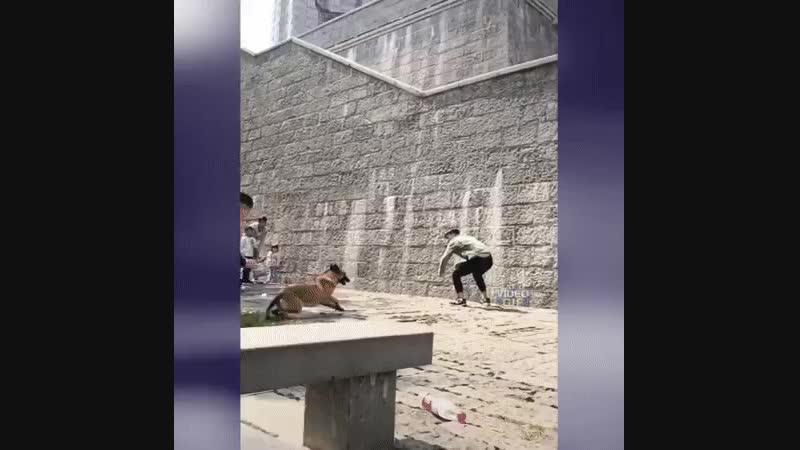 Von diesem Hund wirst du nicht entkommen!
