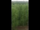 В жилой зоне наукограда Кольцово началась вырубка семи гектаров леса