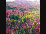 DAZZLING DISPLAY Colorful fall foliage captured by a drone flying high above northern Utahs Ogden Valley.