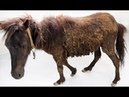 Unexpected Rescue and Restoration - REAL HORSE