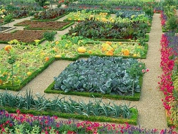дизайн и огорода своими руками картинки на 6 сотках