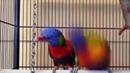 попугайчик-попрыгайчик