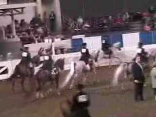 US Arabian Ladies Side Saddle English FINAL
