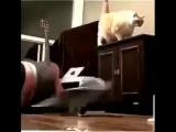 Когда толстый кот не хочет чтобы ты худел ?