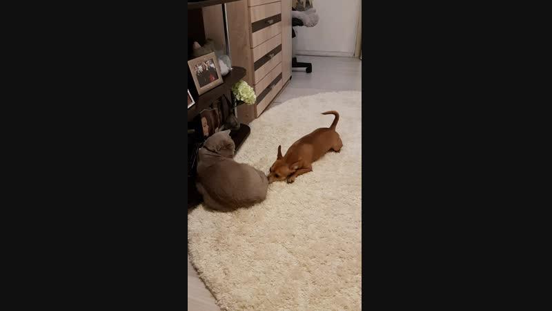 Кот ты зачем пукнул