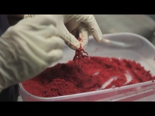 """Behind the Scenes at El Bulli"" by Marcus Gaab - NOWNESS"