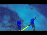Shark Attack 3-13-2014 in the CAYMAN ISLANDS