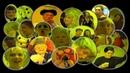 Backstage Antics- Paul Zerdin, Jack Douglas, Brenda Cowling, Chubby Oates, Steve King