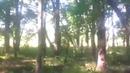 Крутой дубовый лес В поисках капа и сувеля
