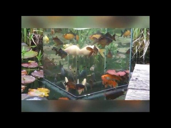 Как сделать аквариум над водой - How to make an aquarium above the water