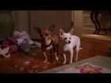 Раз собака, два собака. Веселый клип про собак - детская песня! _Лансере_ Dog. c (1)