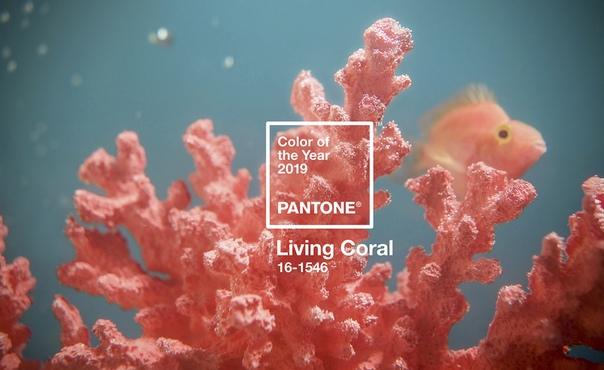 Цвет «живой коралл» придет и в спорт