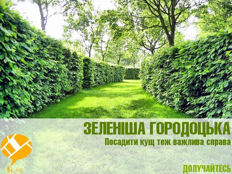 Городоцька кущі благоустрій ініціатива Lypneva