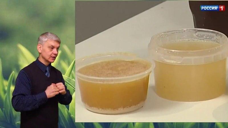 здоровье для глухих! выпуск 040 - натуральный мед. осторожно - плесень