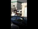 В Баку избит ясамальский зоофил, пойманный на месте преступления