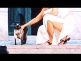 Bella Bella Signorina - Patrizio Buanne