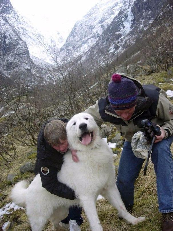 Хозяева обнимают своего полуторагодовалого пса, которого спасли после того, как...