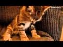 КОТЫ СМЕШНО ЗАСЫПАЮТ ПОДБОРКА ПРИКОЛЫ Kittens dog,cat,kittens,котэ,коты,кошки