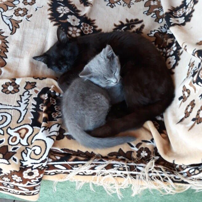 Котёнок и мама❤