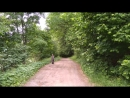 Пение птиц в лесу