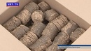 Подари ёлке вторую жизнь В Подмосковье стартовала экологическая акция