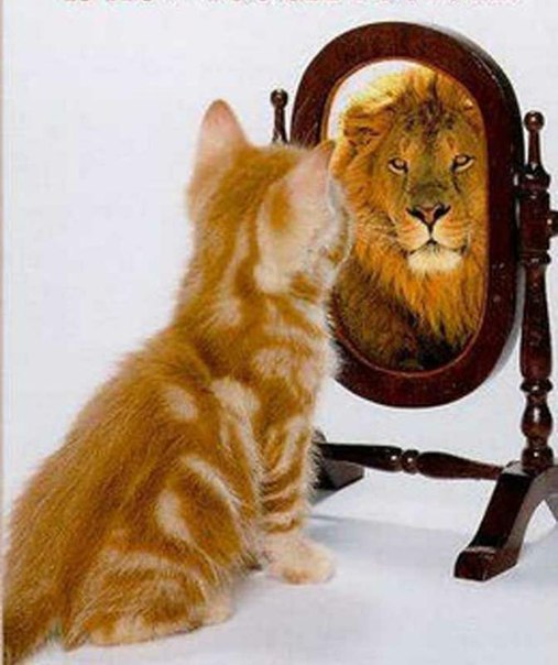 Mirror, Lion, Cat
