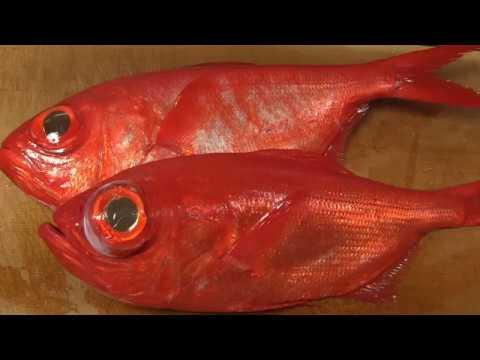 金目鯛のさばき方~炙りと昆布締めの握りの作り方 how to fillet a Splendid alfonsino and make sushi 寿司23