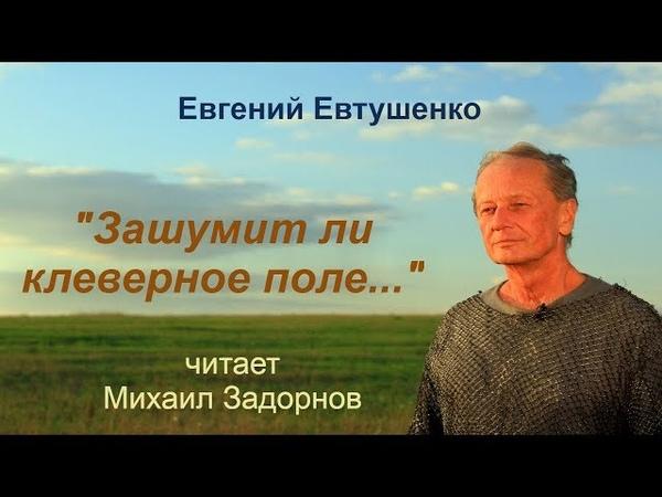 Михаил Задорнов Зашумит ли клеверное поле
