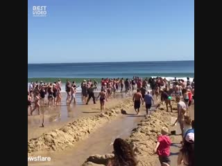 Толпа народу спасла белую акулу